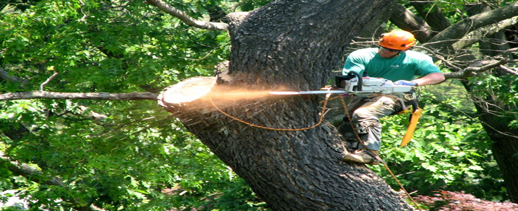 All That You Need To Know About Tree Trimming