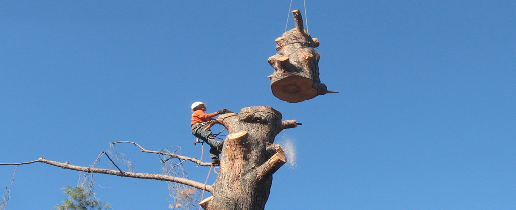 Factors to Consider When Hiring a Tree service Contractor