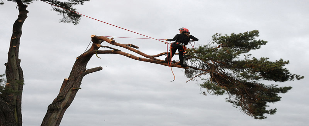 Reasons For Hiring a Tree Removal Professional