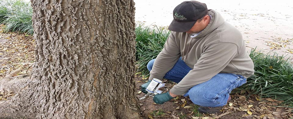 Reasons for Seeking Trees Injection Services